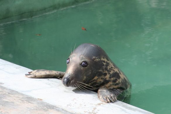 Seal Sanctuary, Zuidwest-Cornwall