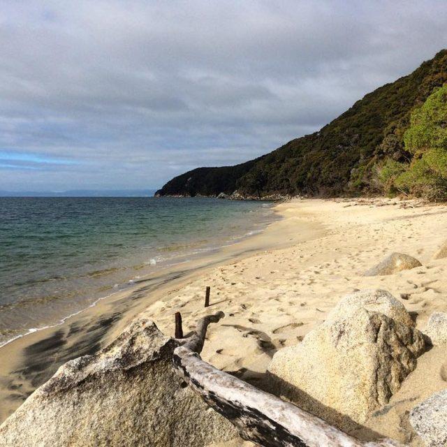 I loved the beautiful golden beaches in Abel Tasman Parkhellip