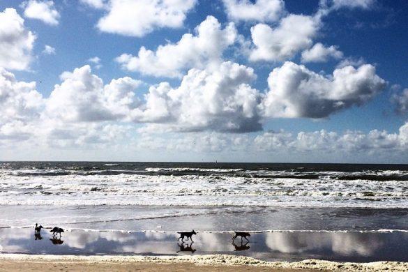 Top 5 Wijk aan Zee met kinderen