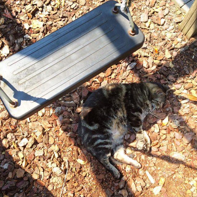 Just enough shade below the swing sunnyday catsofinstagram catstagram catspamhellip