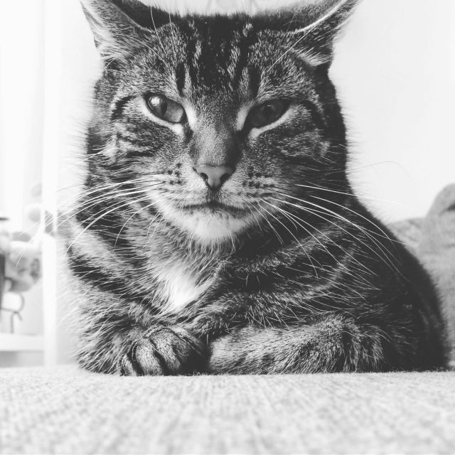 Our cat giving me a disapproving look Probably wants foodhellip