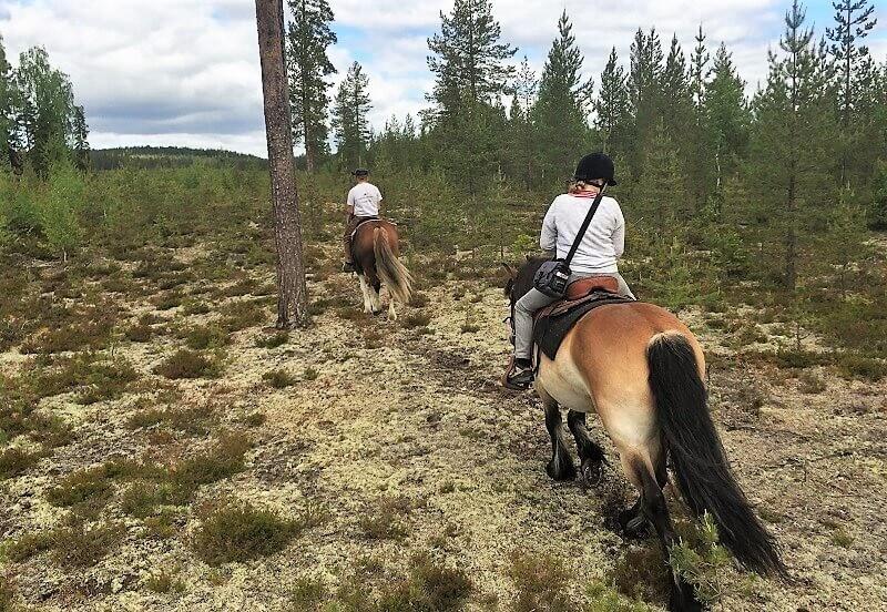 Paardrijden in Zweeds Lapland