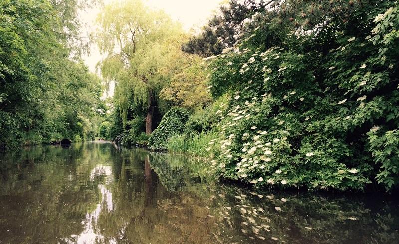 Natuurgebied De Onlanden, Drenthe