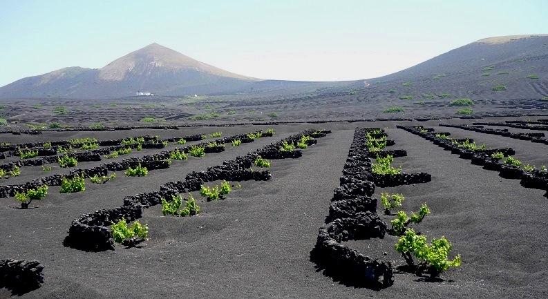 Wijngaarden in La Geria op Lanzarote