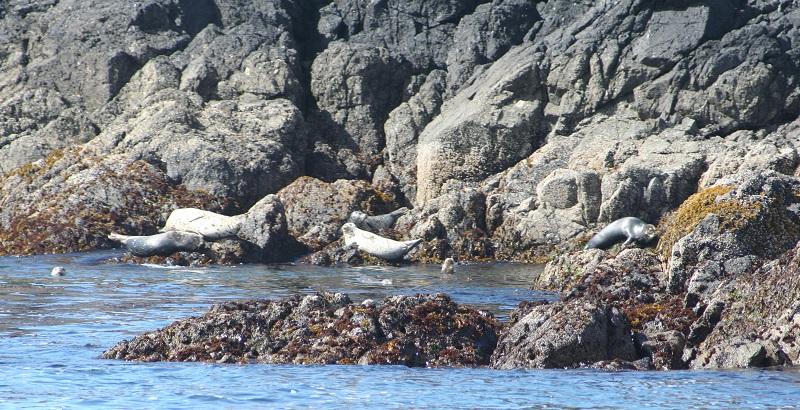 Zeehonden bij Tofino