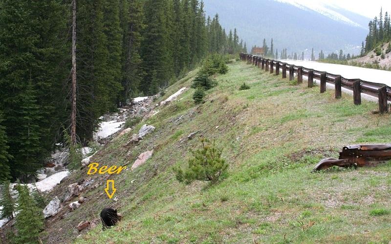 Beren spotten in Canada