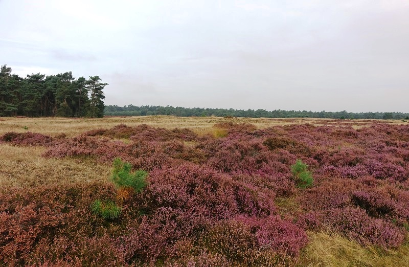 NP De Hoge Veluwe, Gelderland