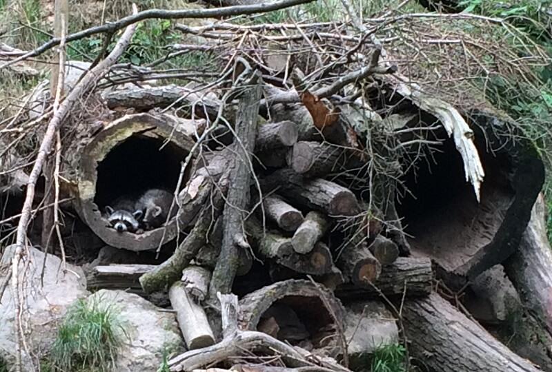 Wildpark Klaushof