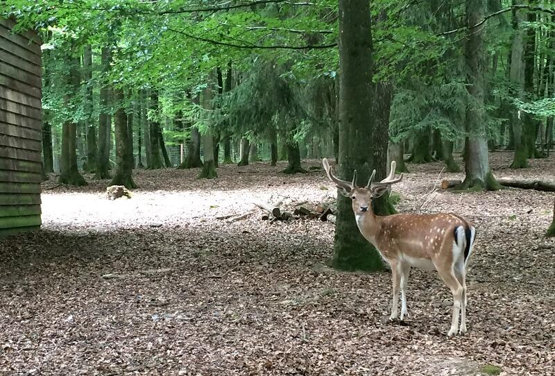 Herten voeren in Wildpark Klaushof