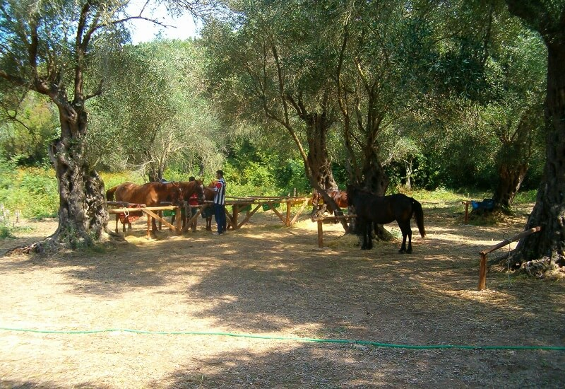 Corfu paardrijden