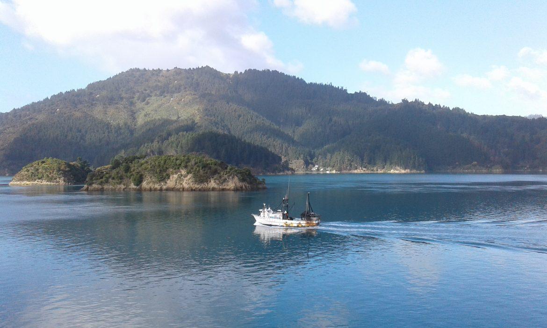 ferry naar het zuidereiland