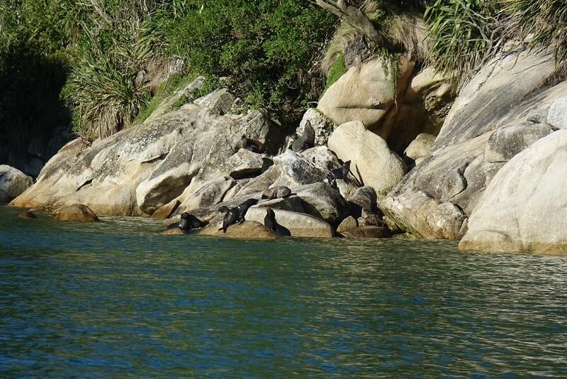 Zeehonden, Abel Tasman Park, Nieuw-Zeeland