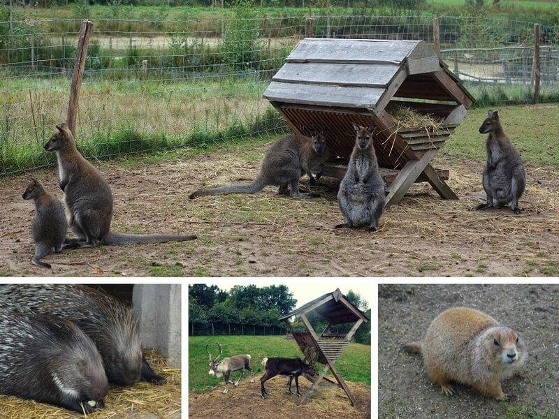 Mini-zoo Hof van Eckberge