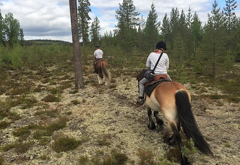 Zweeds Lapland in de zomer
