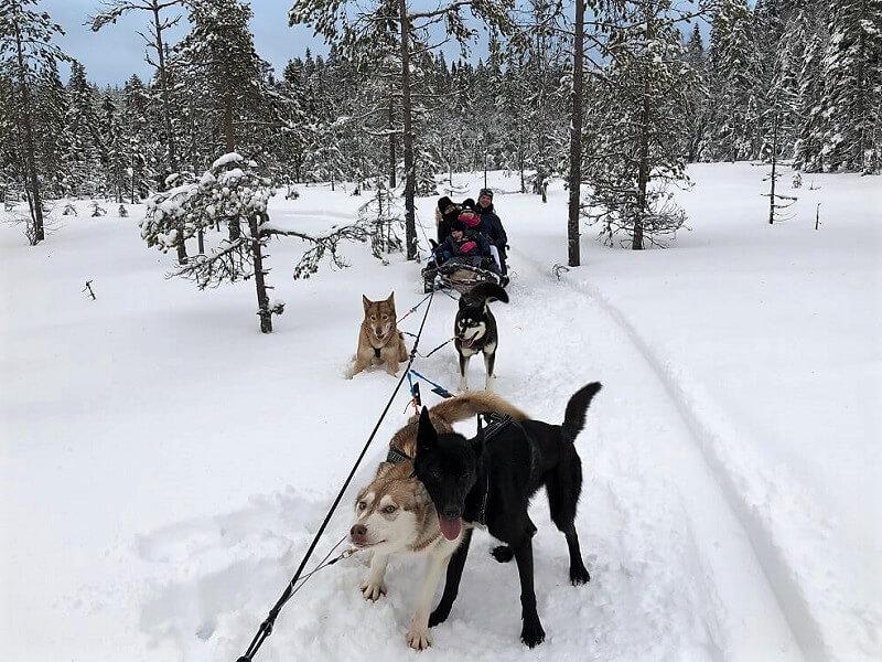 wintervakantie in Zweden met kinderen