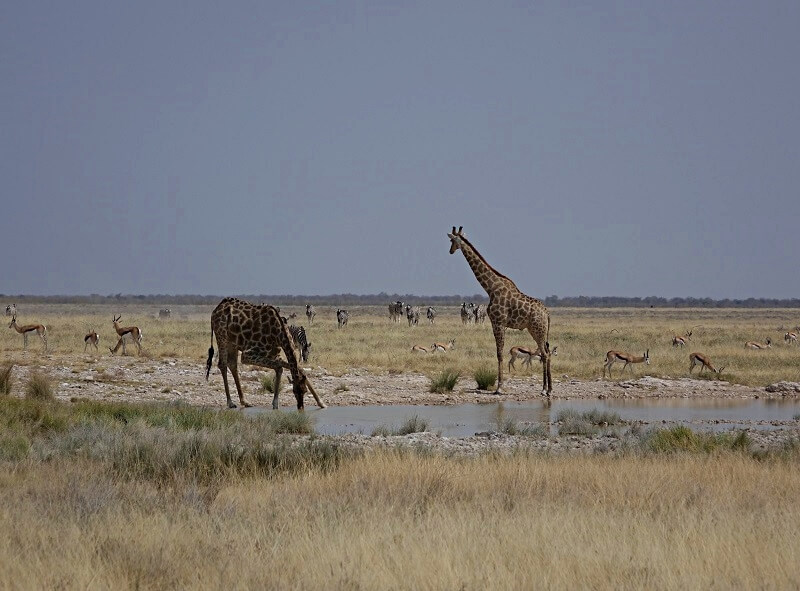 wild spotten in Etosha National Park