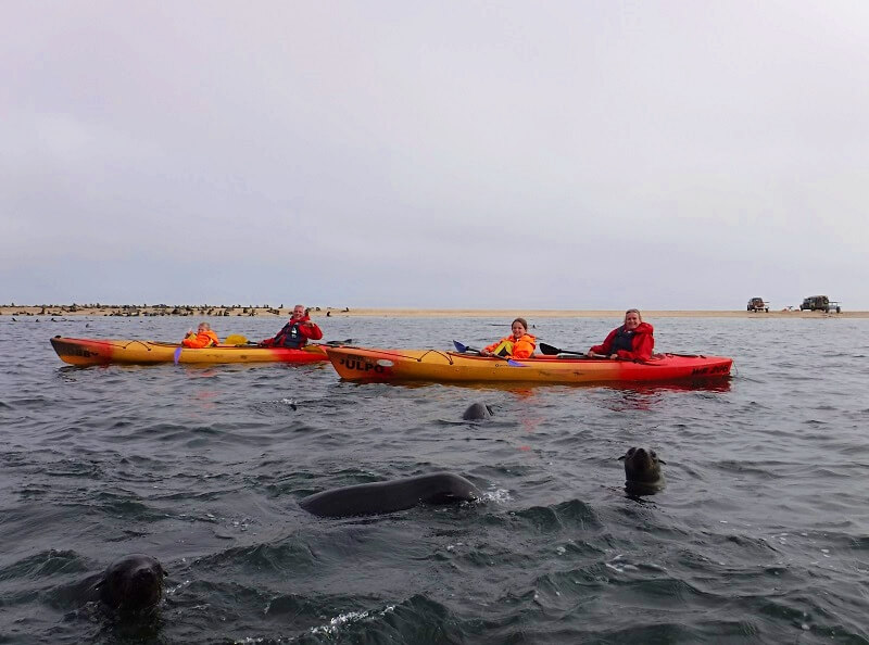 kajakken met zeehonden