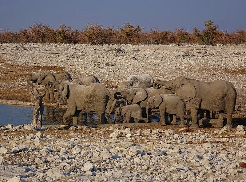 wild spotten in Etosha