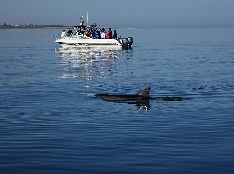 Dolfijncruise bij Walvisbaai