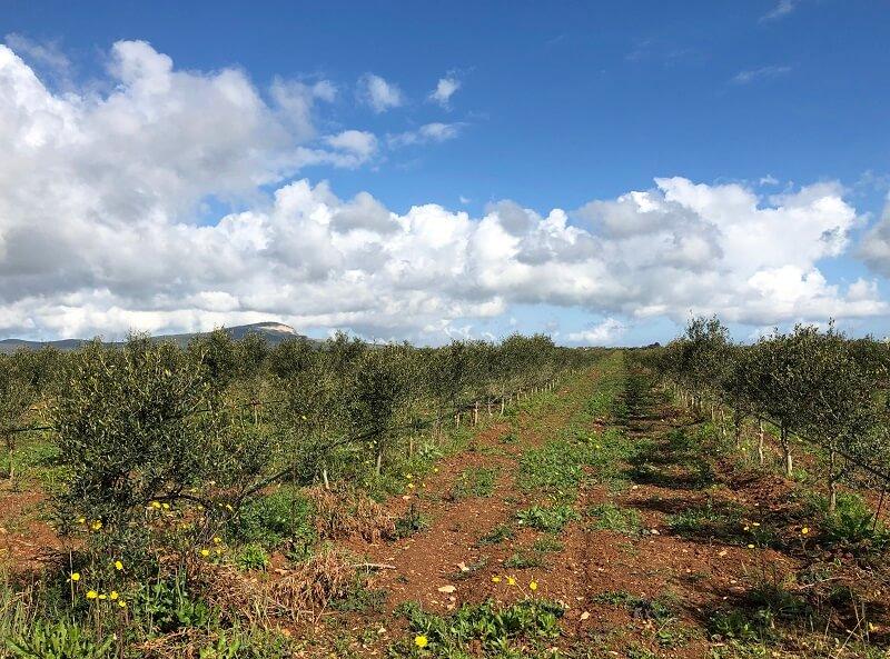 Agriturismo Monte Sixeri