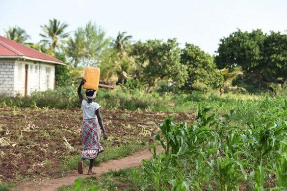 microkrediet Wakibi