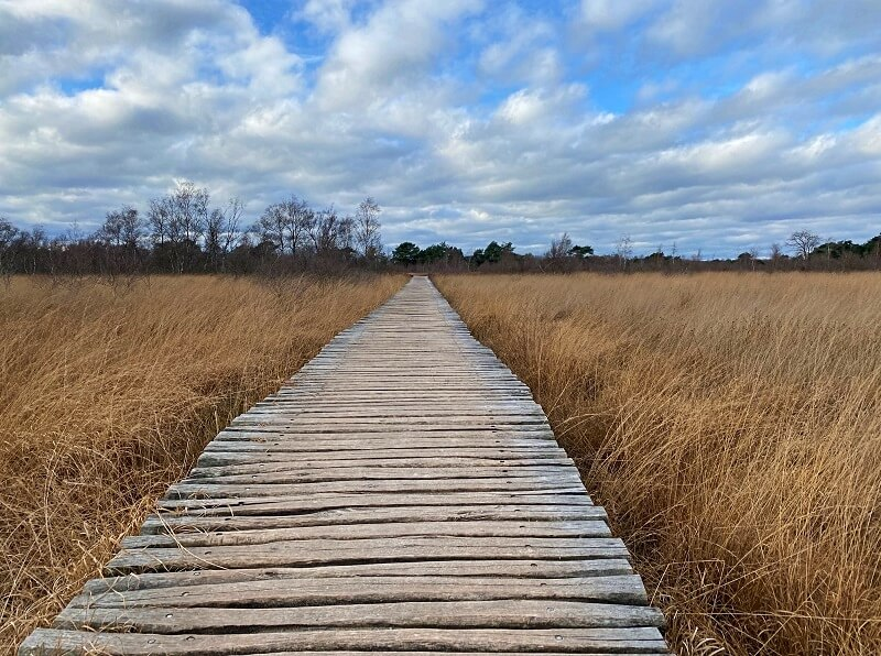 wandelen in De Groote Peel