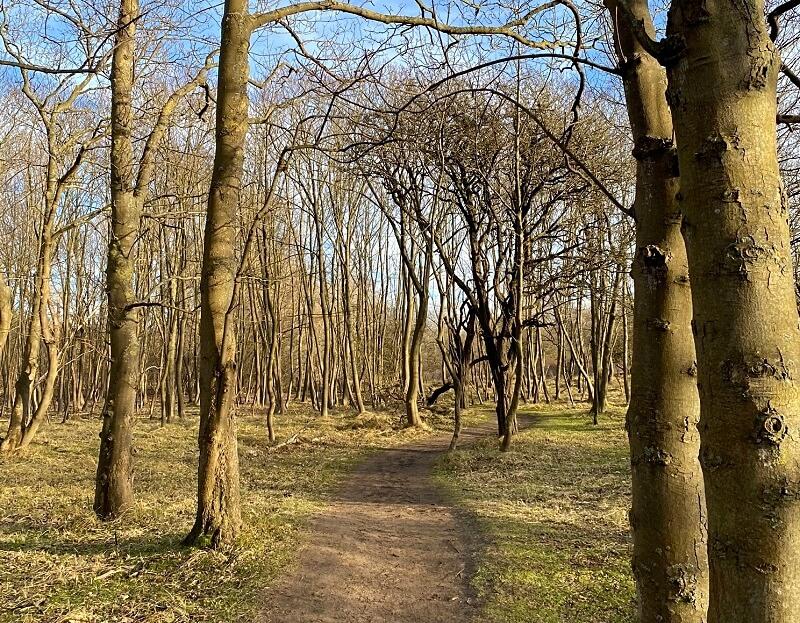 wandelen in Nationaal Park Zuid-Kennemerland